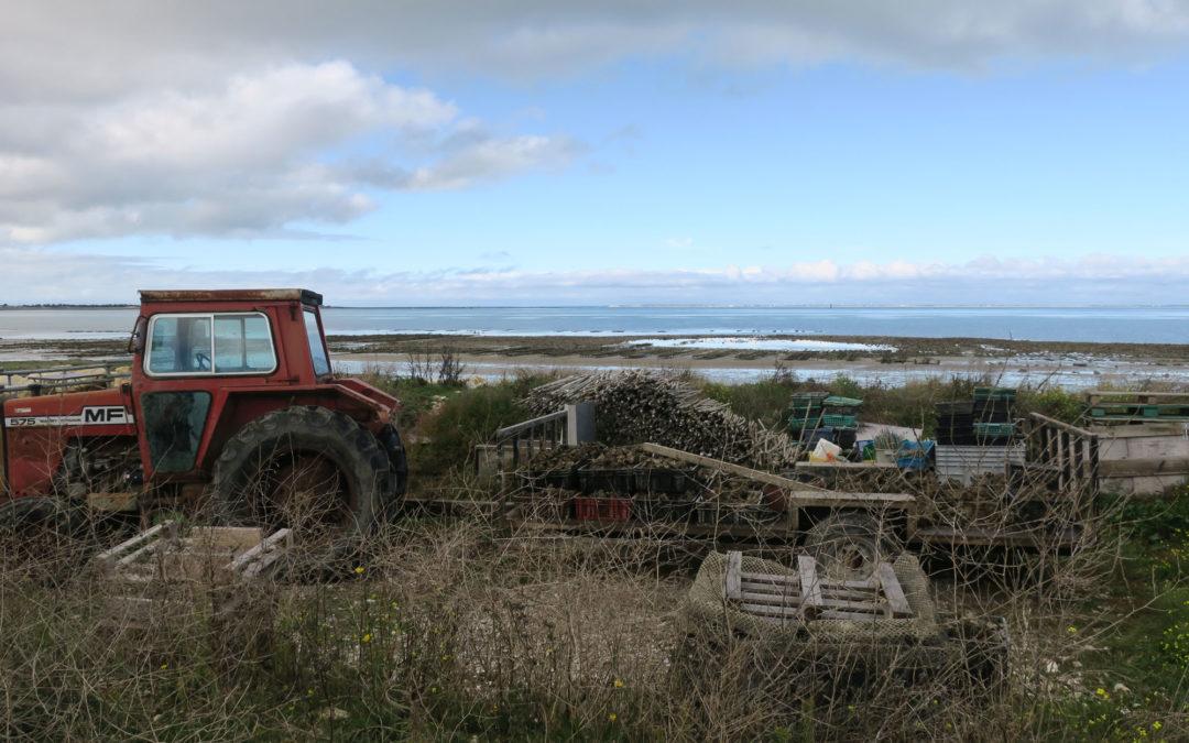 Austern und Saint Martin
