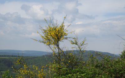 Der Moselsteig – Etappe 11: Bernkastel-Kues – Ürzel