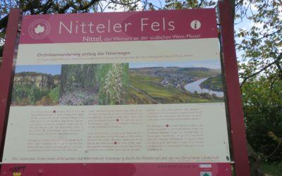 Der Moselsteig – Etappe 3: Nittel – Konz